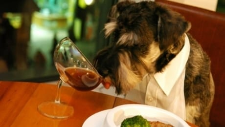Take Your Dog to Dinner at 626 on Rood